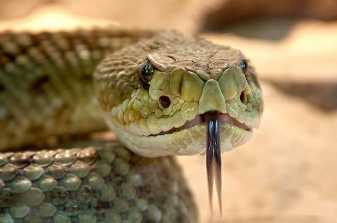 Masajes con serpientes
