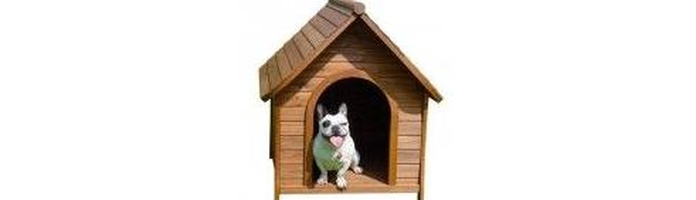 Tienda de perros : Servicios de Cuore Tienda de Animales