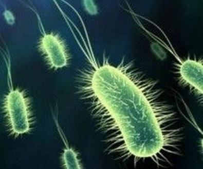 La bacteria que previene de la obesidad