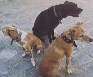 Tratamiento de problemas de conducta canina en Zaragoza