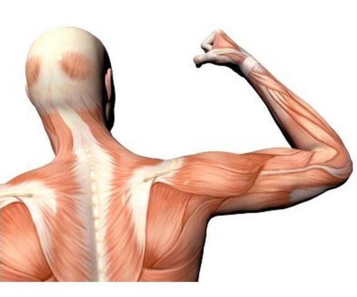Fisioterapia manipulativa articular: Servicios de Fisiovitae
