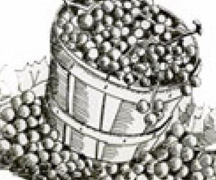 Ilustraciones para cuentos Sevilla