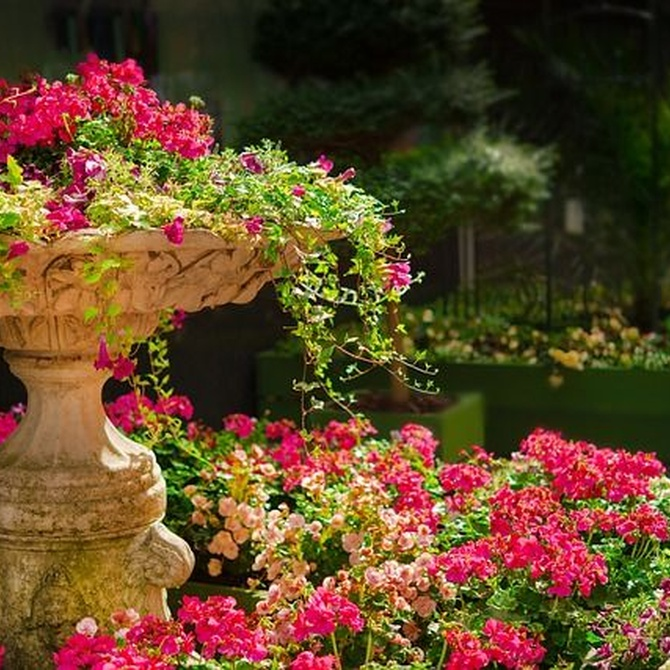 Mantener las plantas de tu jardín durante más tiempo