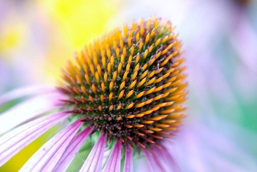 Los beneficios de la medicina homeopática