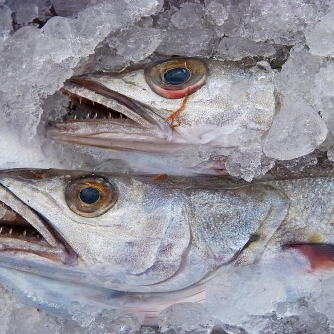 Las especies más demandadas de pescado
