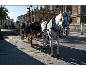 Paseo personalizado en coche de caballos
