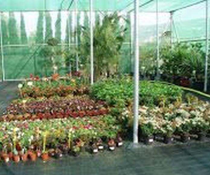 Venta de plantas, flores y árboles: Servicios de Ayamanda