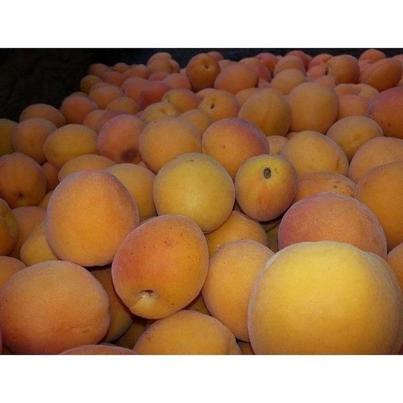 Albaricoque: Productos de Mundifruit