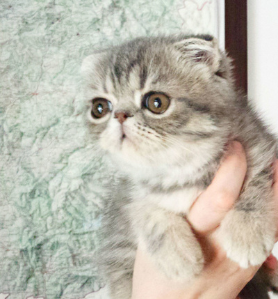Gatos: Mila-Bierzoo
