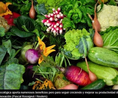 Aumentar el rendimiento en la producción ecológica