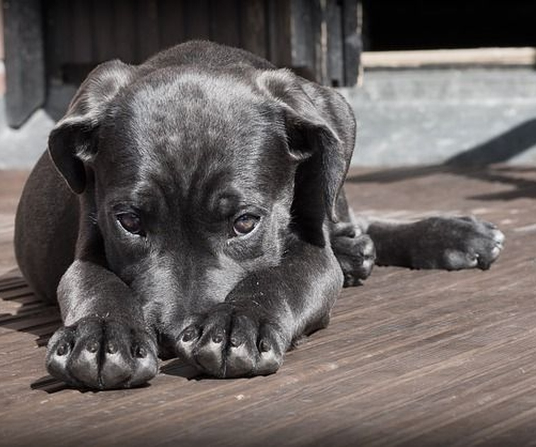 ¿Qué alimentos no pueden comer los perros? (II)