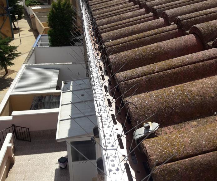 Sintemas anti-aves en tejado