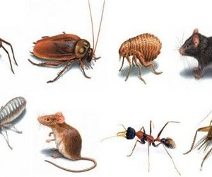 Desinfección, desinsectación , control de plagas, termitas, cucarachas, ratas...