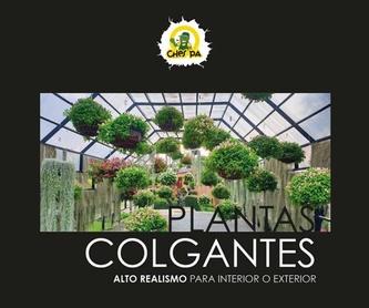 Planta colgante 419270: ¿Qué hacemos? de Ches Pa, S.L.