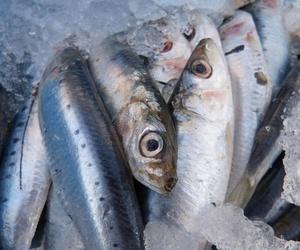 Venta al por mayor de pescado