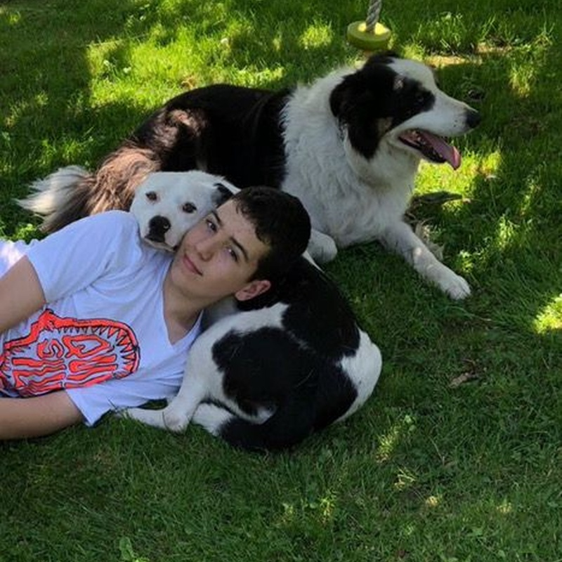 Otros servicios: Servicios de Sistema Integral de Mascotas - SIM