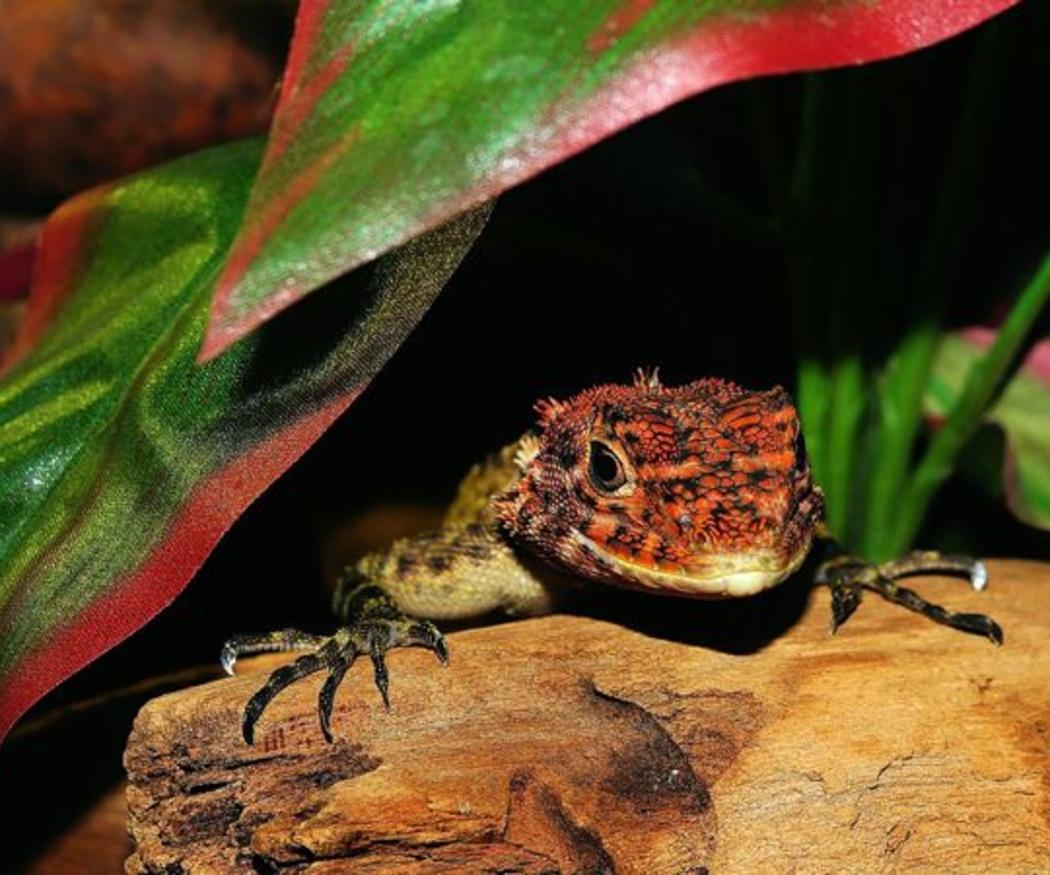 El coste de recrear los hábitats de los animales exóticos