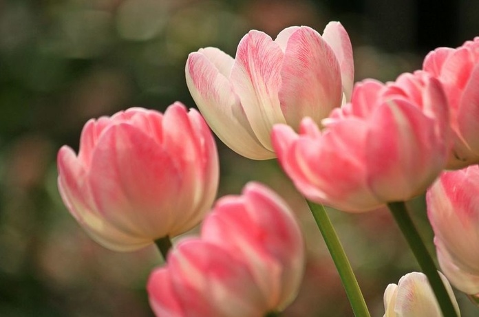 Floricultura: Servicios de Jardinería Roberto