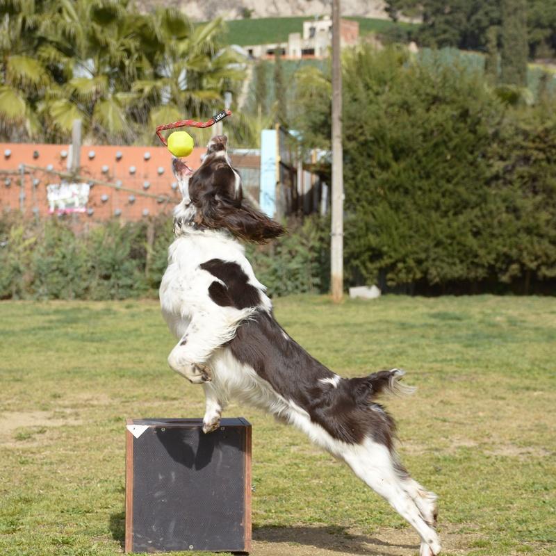 Perros k9: Servicios de Centre Caní De Pedracastell