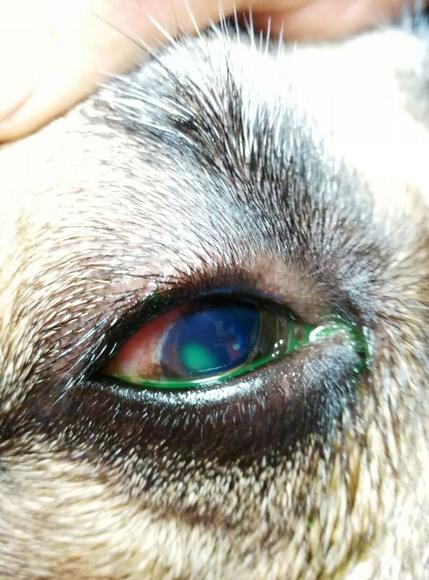 Consulta veterinaria: Servicios de Clínica Veterinaria Sarriguren