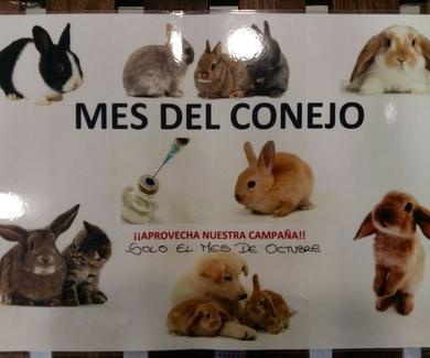 Desparasitación y vacunación de conejos en Móstoles