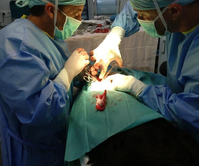 Cirugía general: Servicios de Clínica Veterinaria Llíria