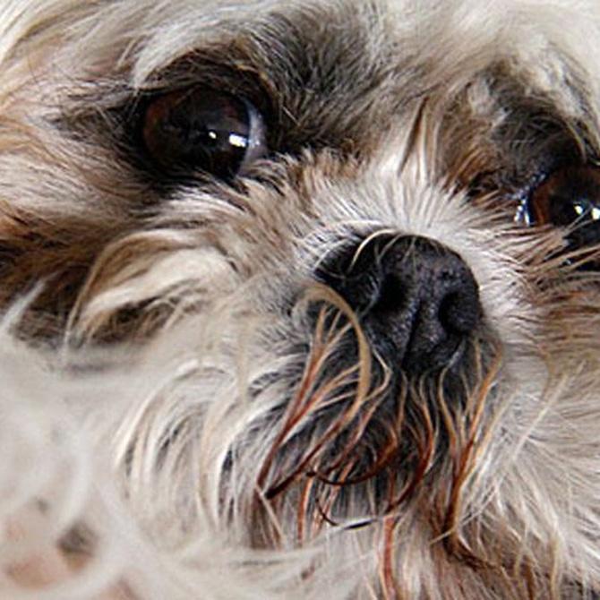 Parásitos internos en los perros
