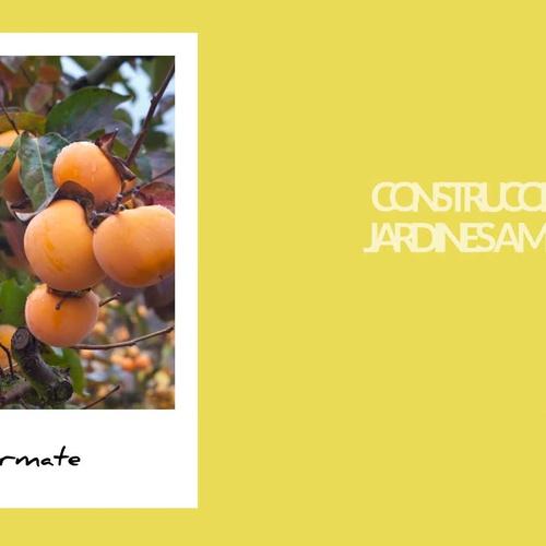Injertos de árboles cítricos en Valencia: Agrojove