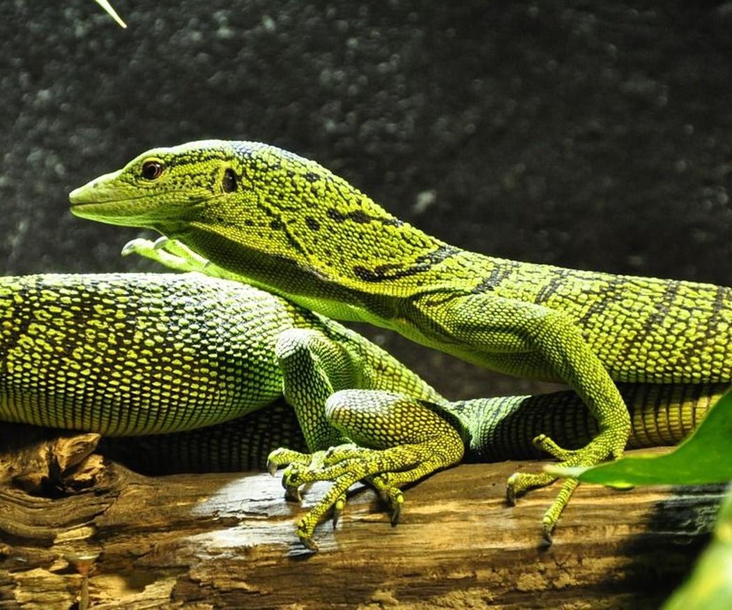 Cuidados básicos para tu reptil