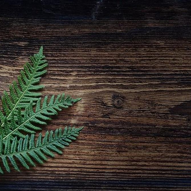El papel de la madera en el aislamiento de los hogares