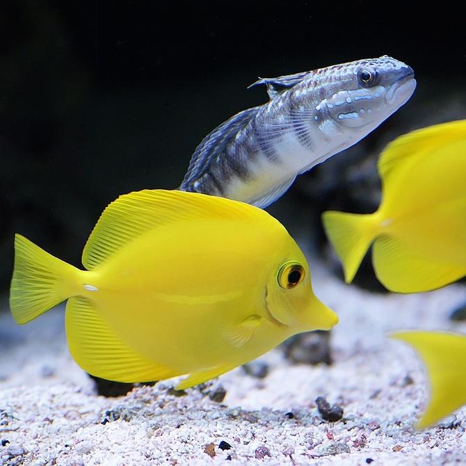 ¿Qué temperatura necesitan los peces tropicales?