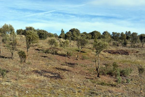 Trabajos forestales en Segovia, Servicios Forestales FSV