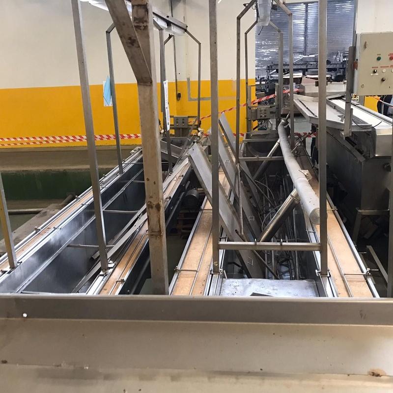 Línea de cocción y eviscerado de sardinas:  de MAQUIMUR