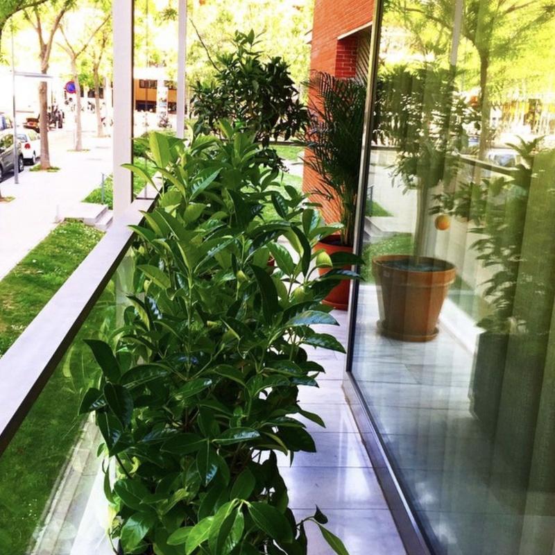 Servicio integral de jardinería: Servicios de Sarria Flors