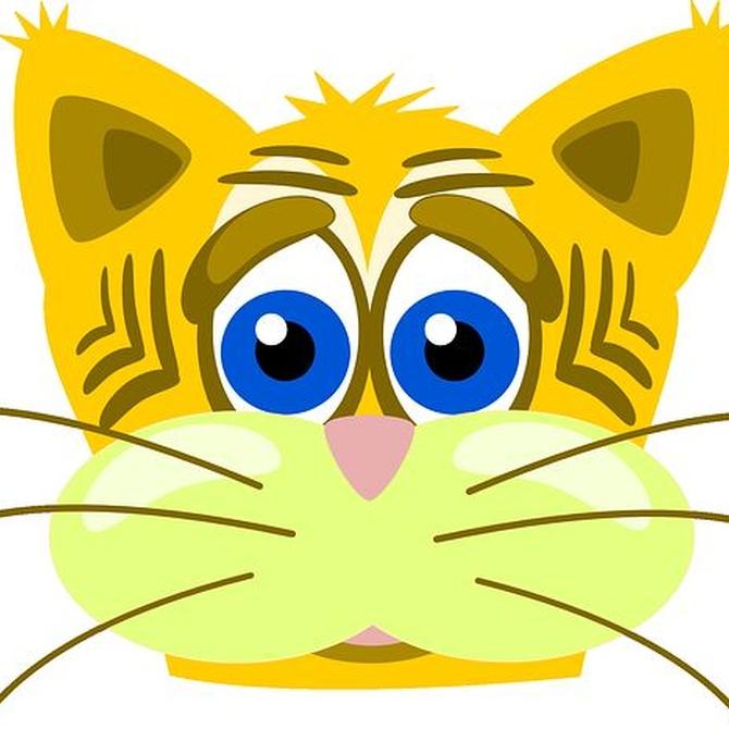 Consigue que tu gato le pierda el miedo al veterinario
