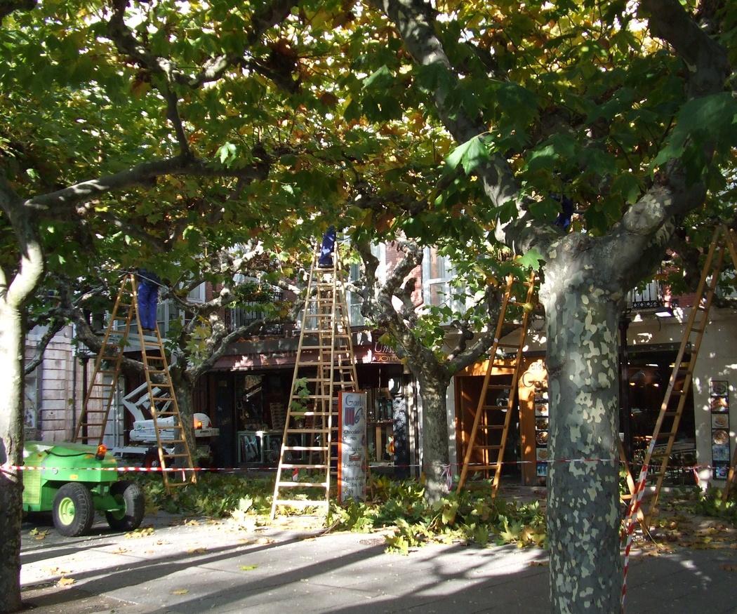 ¿Cómo beneficiar el crecimiento de los árboles?