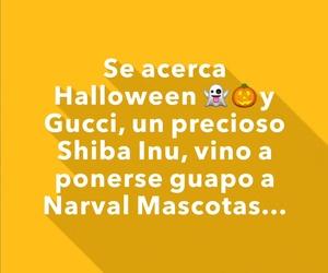 Narval Mascotas peluquería canina Leganes | Halloween