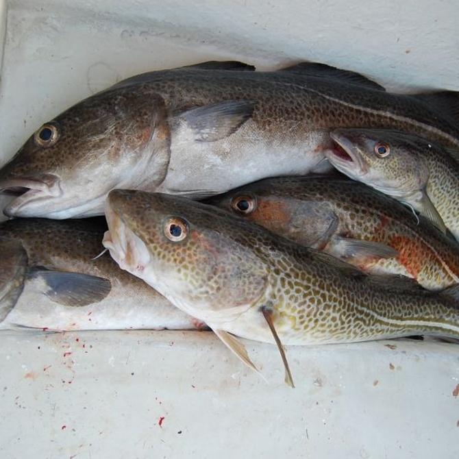 Descubre los beneficios de comer bacalao