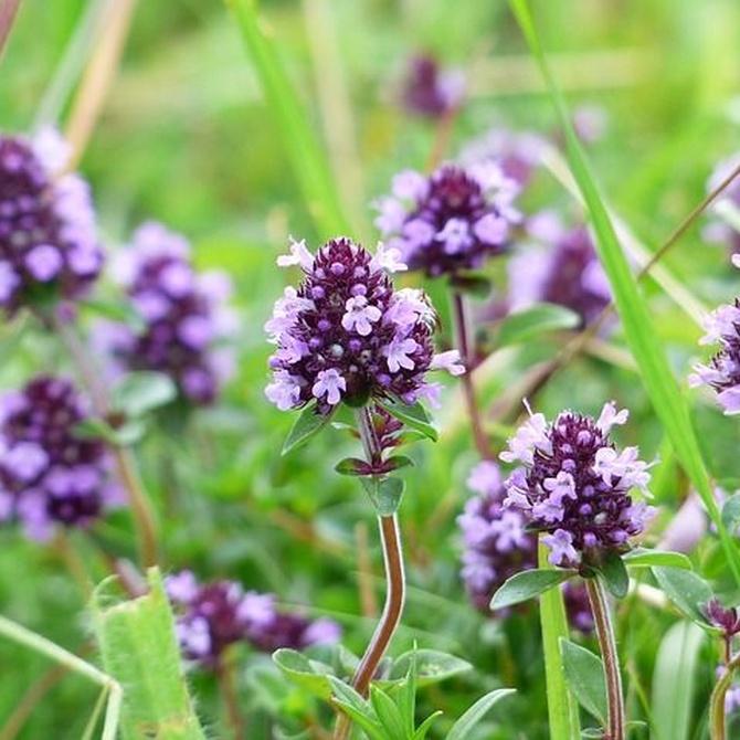 ¿Qué es la herbodietética?