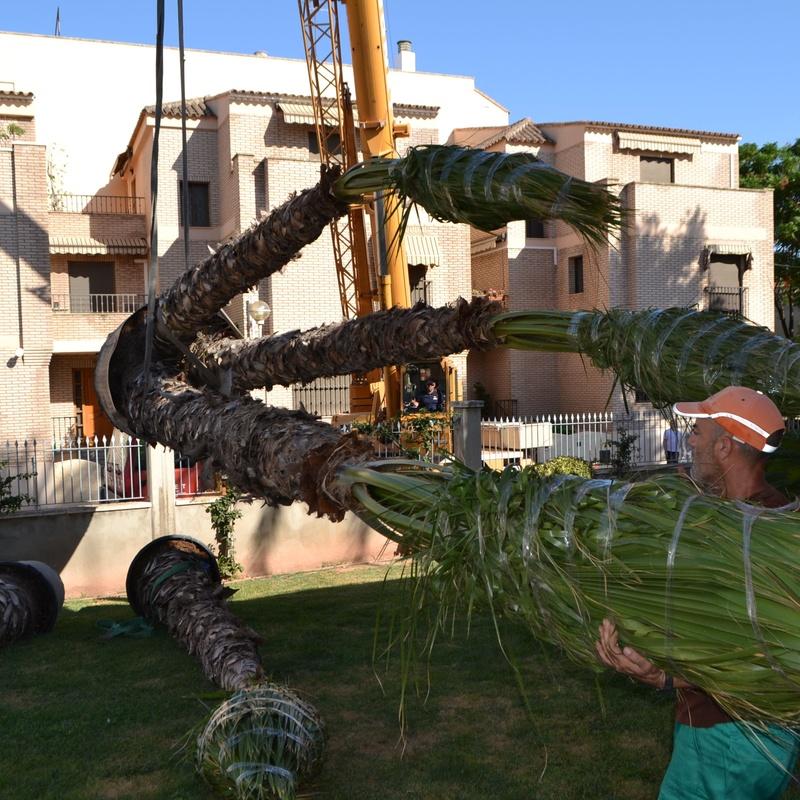 Trasplante de palmeras.: servicios de Podavalti