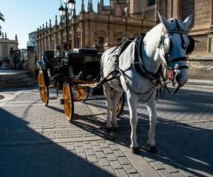 Visitar Sevilla en coche de caballos