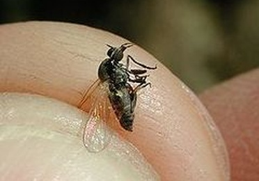 Mosquitos y moscas