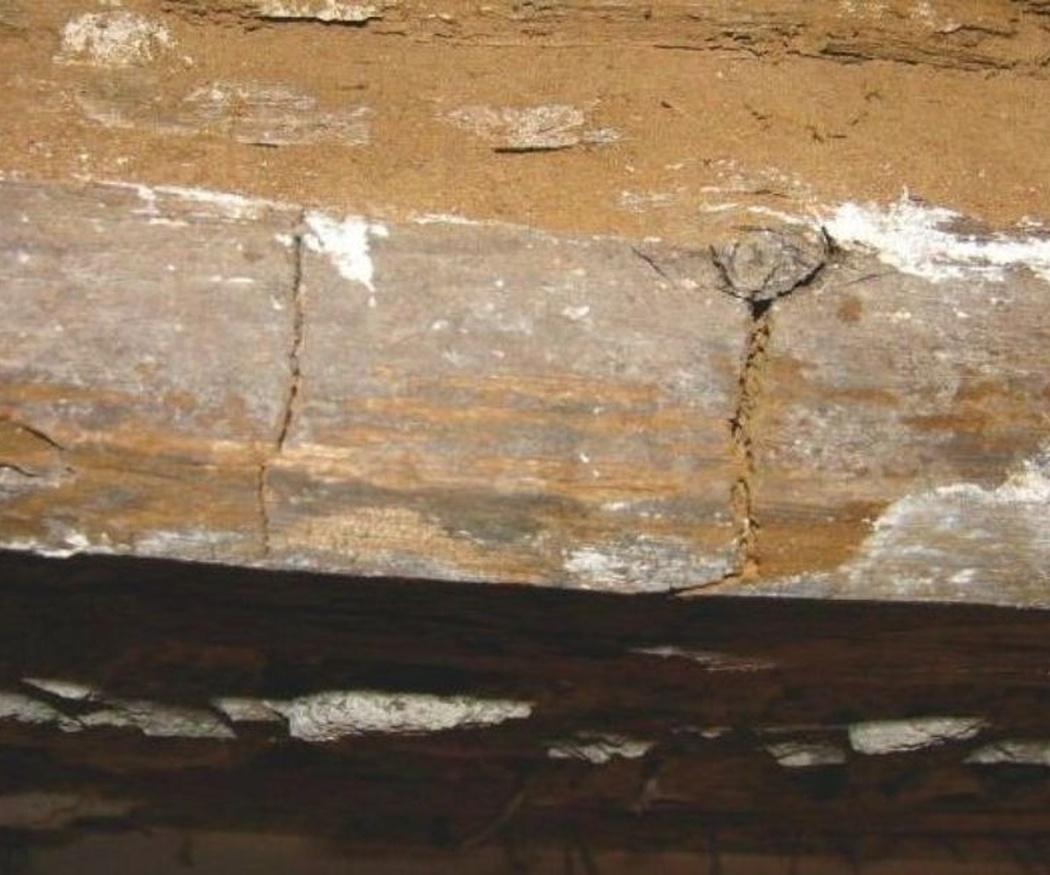 Las diferencias entre la carcoma y las termitas