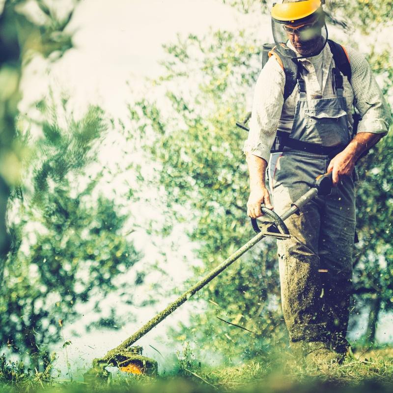 Mantenimientos de jardines y grandes superficies: Servicios de Jardinería Belardi, S.L.