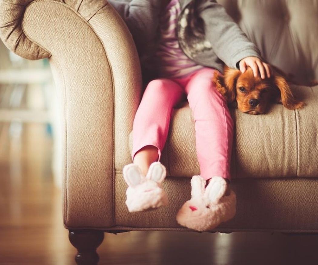 Algunos consejos si vas a tener un perro en casa
