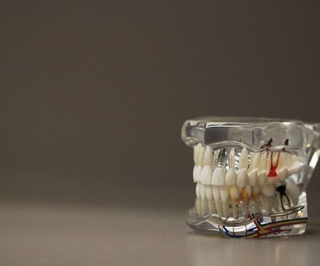 La sustitución de la dentición