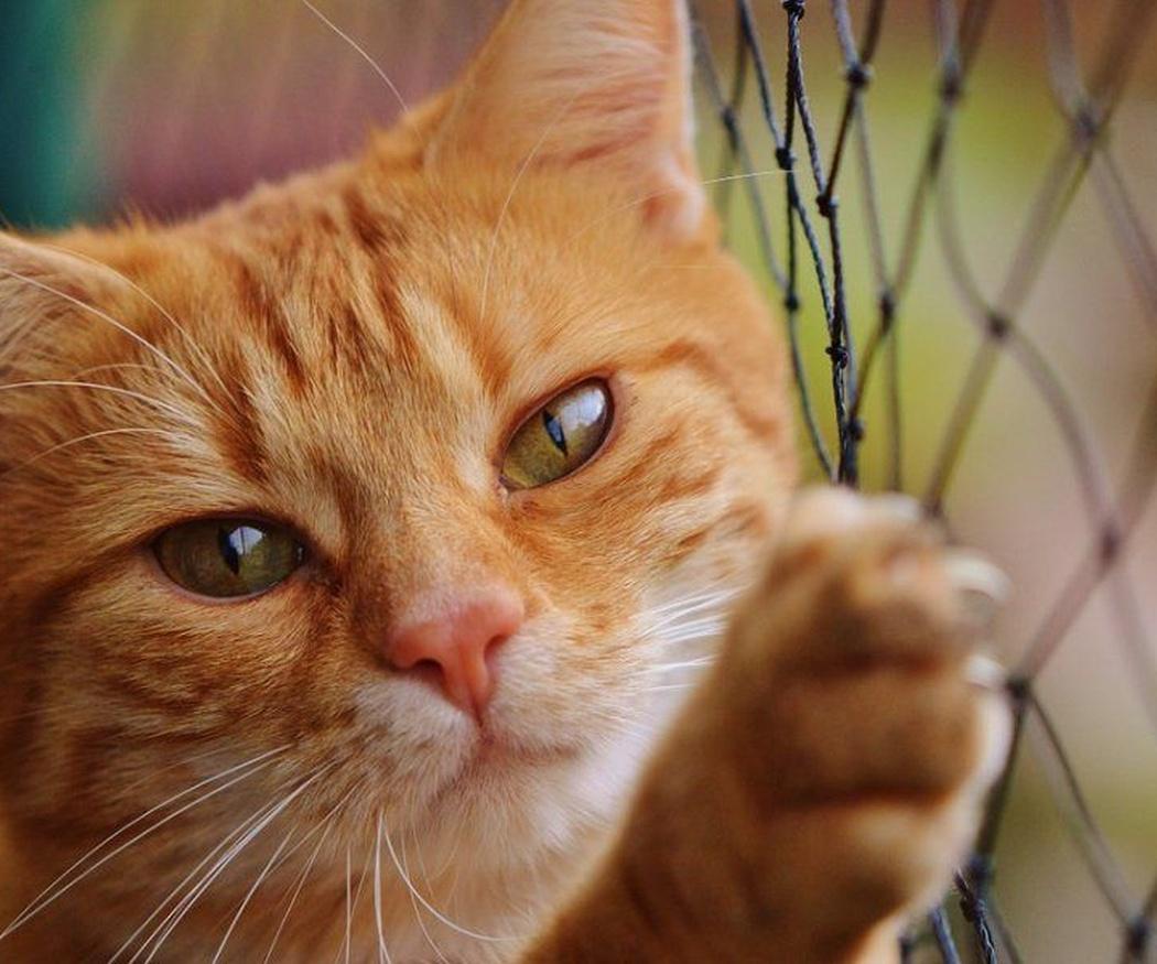 ¿Le das malta a tu gato?