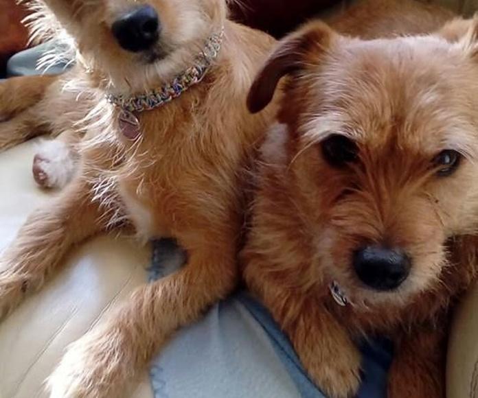 Adopción: Servicios de Animal in Need & Prodean