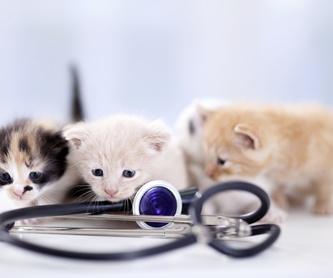 Complementos: Nuestros servicios de Clínica Veterinaria Lovets