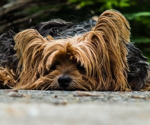 ¿Por qué cada raza de perro tiene un corte de pelo diferente?